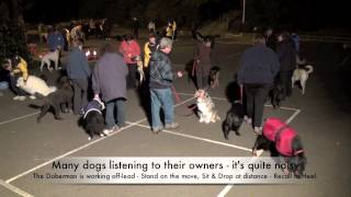 Alpha Advanced Dog Training - 31st July 13