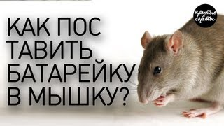 Как поменять батарейку в мышке