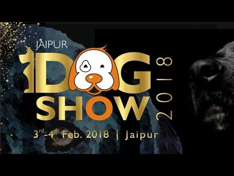 K C I Dog Show In Jaipur 3rd Feb. 2018 ,,,,,, Must Watch