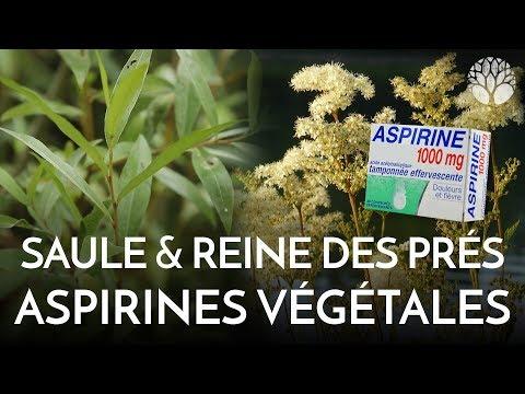 Astragalus membranaceus phytotherapie : Comparatif - Plante - Avis | Quels sont les effets secondaires ?