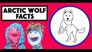 Arctic Wolf Song | Arctic Animals for Kids |  Arctic Animals | Story time with Annie & Rocco