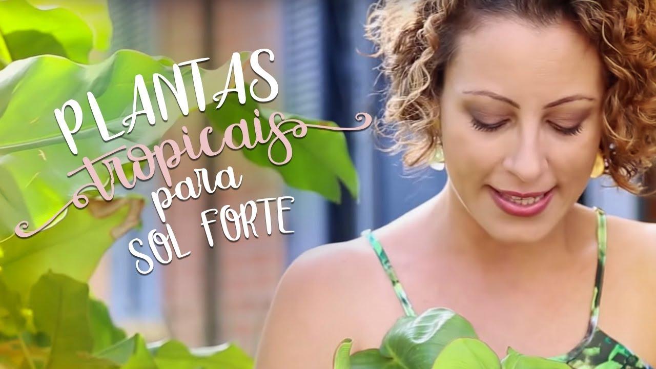 plantas jardim de sol:plantas tropicais resistentes a sol forte e pouca água – YouTube