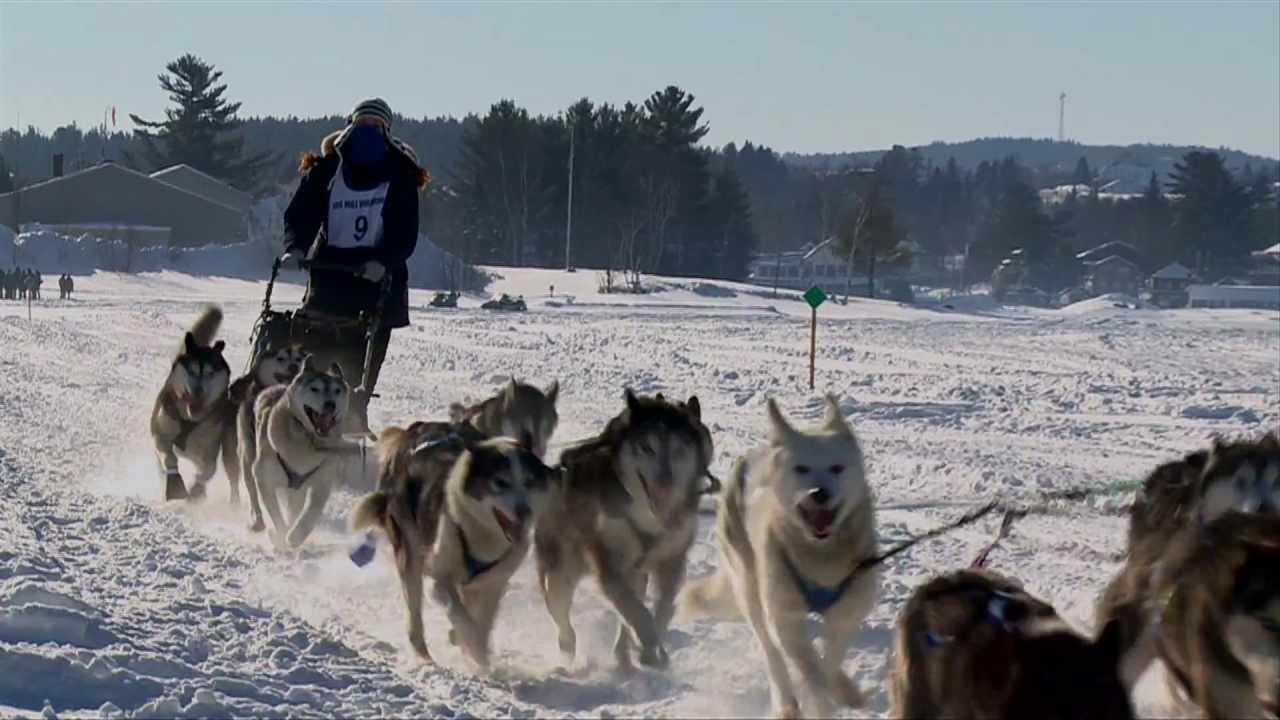100 mile Wilderness Sled Dog Race