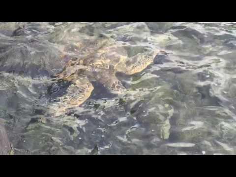 Sea Turtles at Polo Beach | Kihei, Hawaii | Maui