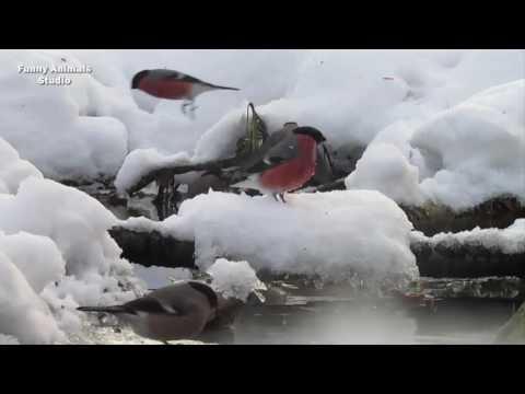 Птицы, которые прилетают на нашу дачу зимой