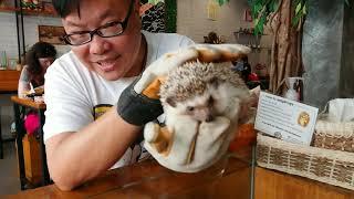 清邁可愛小刺蝟咖啡店