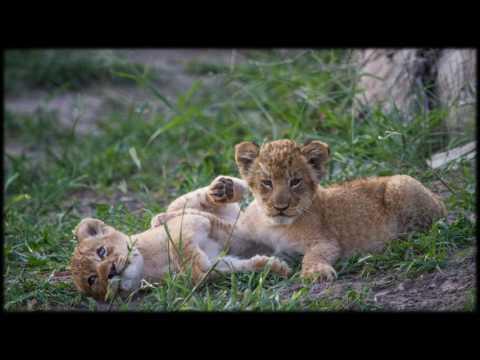 African Wildlife AIB Part 65