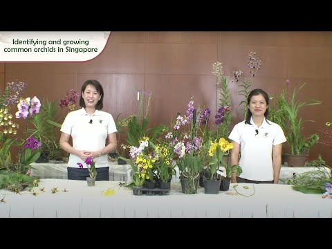 Gardening Masterclass: Identifying And Growing Common Orchids In Singapore