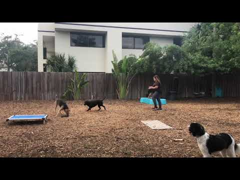 Stark | GSD | Obedience Training Day 10