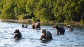 Дикие животные Сибири