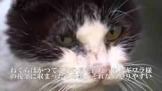 猫たちの抗争が続く住宅地に突如現れた負傷老猫。動物病院へ行き、動画...