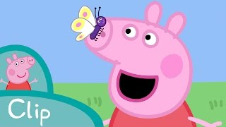 Video Peppa Pig Français | Peppa et le papillon download MP3, 3GP, MP4, WEBM, AVI, FLV Januari 2018