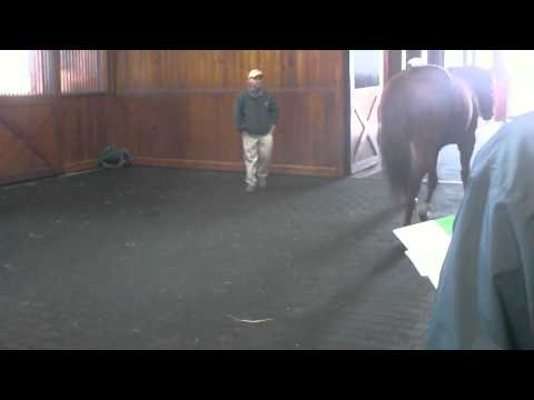 Limehouse - Vinery Stallion Show