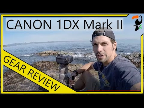 Canon 1DX Mark II Review for Bird and Wildlife Photographers