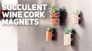 Cork Magnets With Succulent / DIY