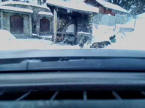 Winter drive through Buzau mountains