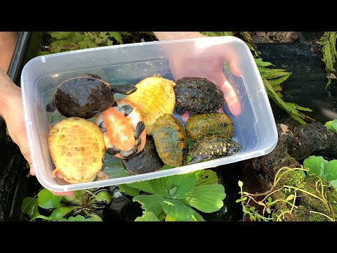 *NEW* SETTING UP ABOVE GROUND TURTLE POND AT MY HOUSE (pt 2)