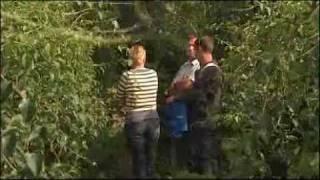 De Kiwibes nieuw fruit van Belgie