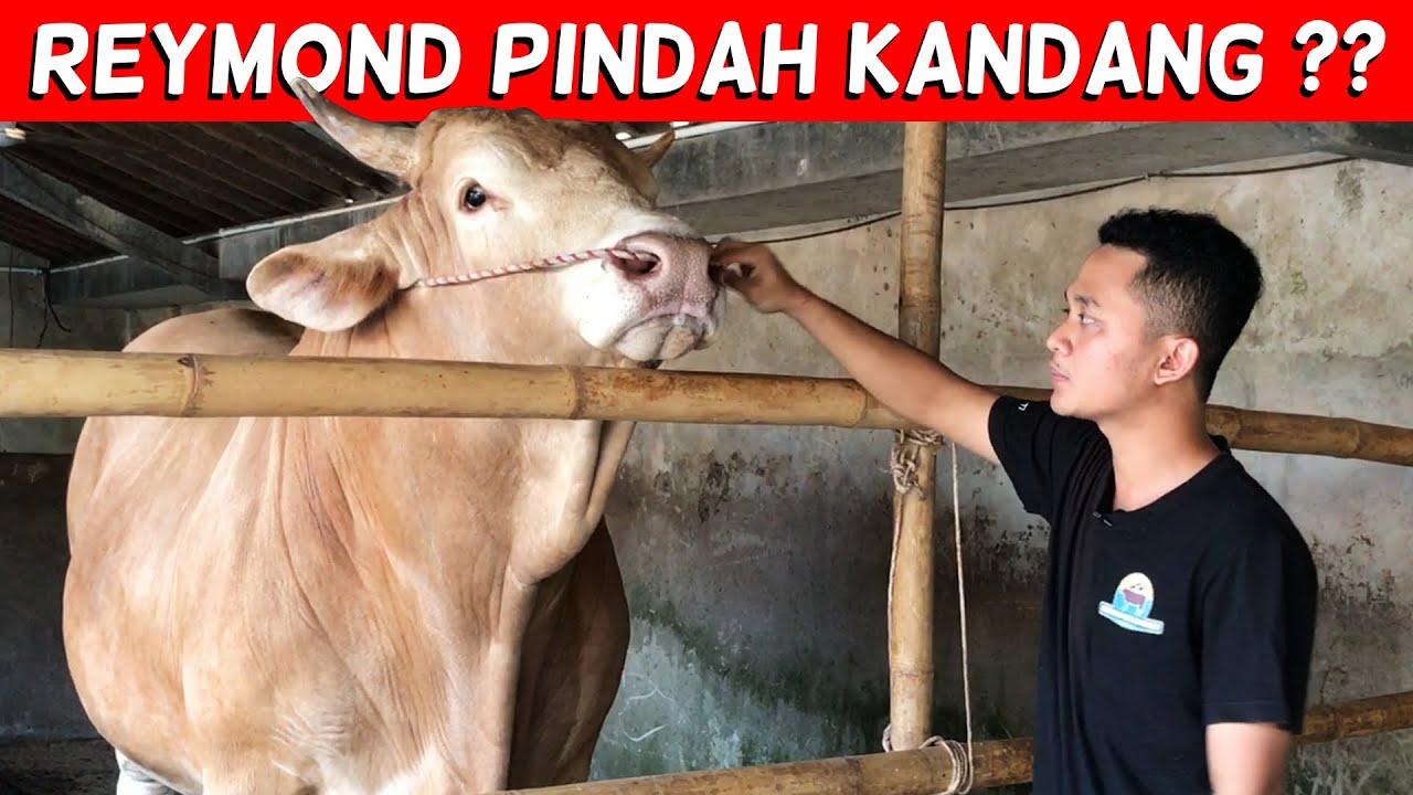 KANDANG BARU UNTUK MAS REYMOND :')