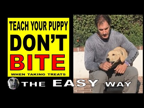 How to Stop PUPPY Biting When Taking Treats - PUPPY Dog Training Video