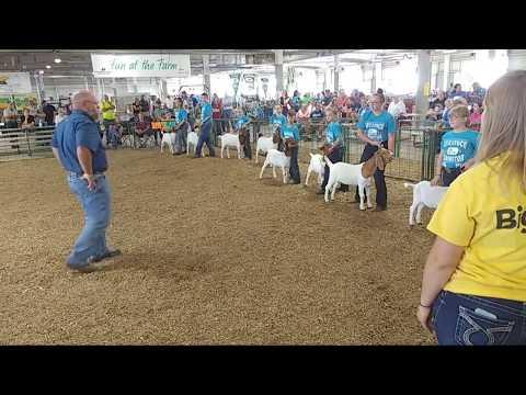 2017 Lancaster County Super Fair - 4-H & FFA Meat Goat Show (entire show)