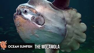 10 of The Biggest Sea Monsters Ever Caught!
