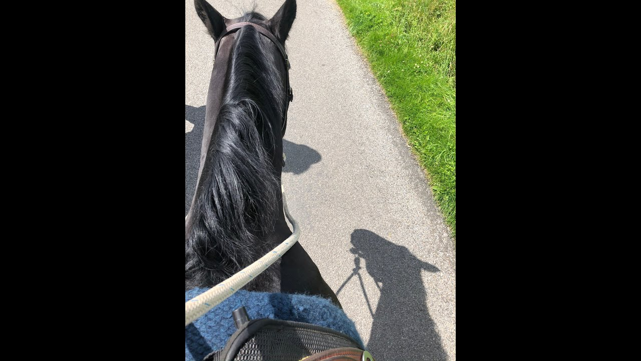 Horse Riding in Yorkshire : The Bull Field Ride Part 1 : Irish Cob and a Standardbred