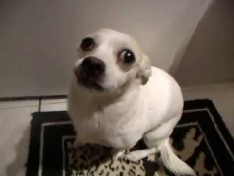 Dogs In A Bathtub Video