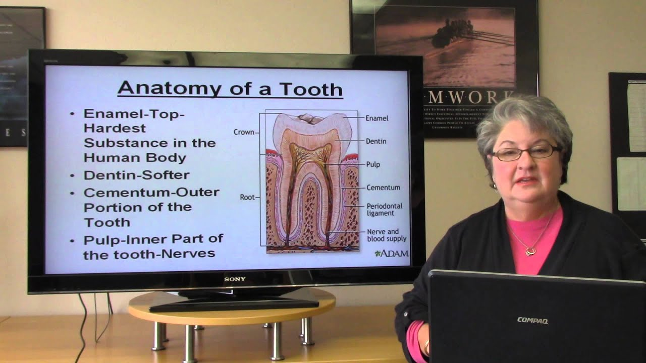 Basic Dental Terminology Youtube