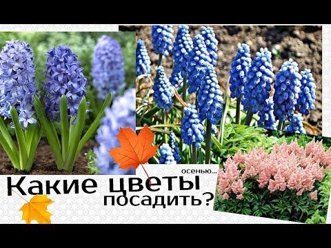 Вопрос: Семена каких декоративных цветов можно сеять на рассаду осенью под зиму?