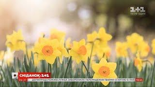 Весна може врятувати людство від коронавірусу