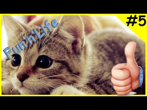 Приколы с кошками Смешные коты и кошки 2017 | Fun'n'Life #5