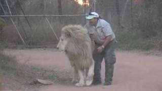Man Attacks Lion and tickles his Nuts!!