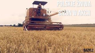 Polskie Żniwa! Bizon w akcji! Wielkopolska! Roszki!