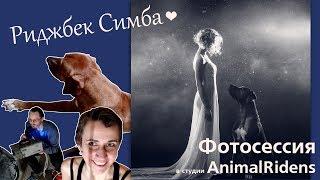 ВЛОГ. Родезийский риджбек Симба. Фотосессия в студии Animal Ridens.