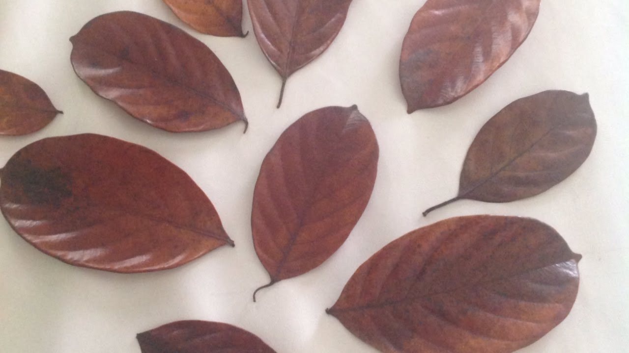 How To Preserve Leaves With Glycerin Diy Crafts Tutorial