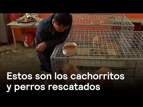 Estos son los cachorritos y perros rescatados en Iztapalapa  - En Punto con Denise Maerker