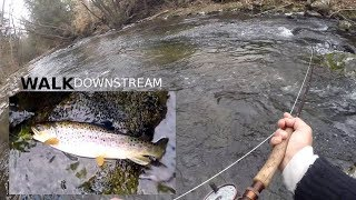 Fishing for BROWN TROUT - A Scenic Afternoon Walk Along a Old Stream
