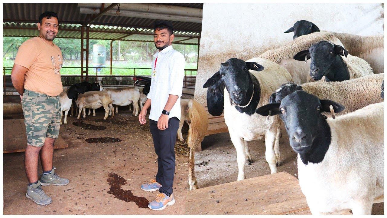 मेंढी पालन हा कमी खर्चात भरपूर उत्पन्न देणारा व्यवसाय ! माहिती व मुलाखत | Sheep Farming maharashtra