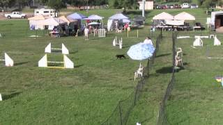 Emily And Mr. Peabody Exc Jumpers 9-16-12.wmv