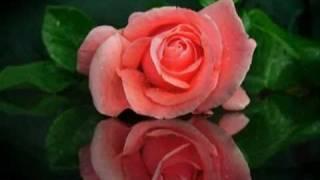 Алая роза - Виктор Королев(Видеоролик на песню Виктора Королева - Алая роза., 2011-06-18T13:08:17.000Z)
