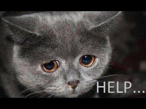 download Help homeless poor cats