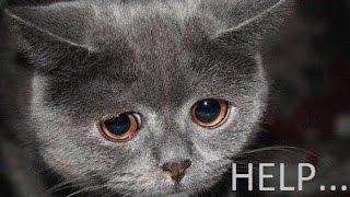 Help homeless poor cats