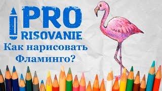 Видеоурок Как нарисовать Фламинго