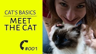 Living with a cat | Basic stuff | Awesome Birman cats