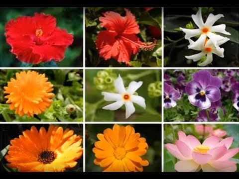 छत्त पर बाग़वानी - How to use edible flowers grown on the Terrace Garden