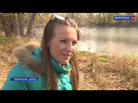Грибы Волгоградской области / Съедобные грибы, ягоды, травы