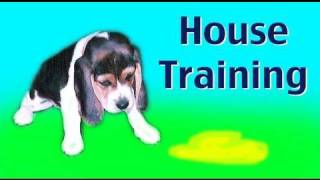 Dog Training: House Training A Puppy Or Rescue Dog