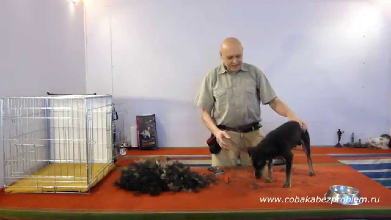 5  Как приучить собаку к триммингу шерсти.  Заключение