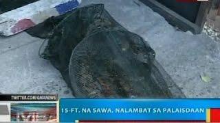 BP: 15-ft. na sawa, nalambat sa palaisdaan sa Dagupan City